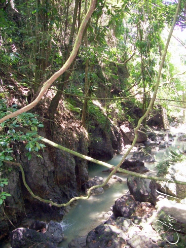 Vines swinging across a creek at the park.