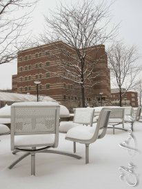 Snow-covered chairs outside the Berkey Creamery at Penn State. The building in the background is the Agricultural Sciences and Industries building.