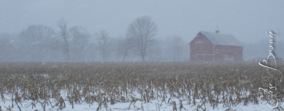 The neighbor's barn in the blowing snow.