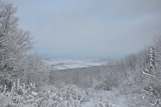 A foggy look at Happy Valley, PA, on Valentine's Day 2013.