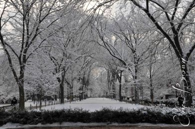 Looking south toward downtown State College through the trees along the Pattee Mall.