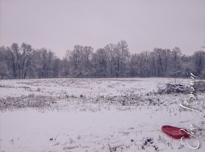 The sled on the hillside pasture.