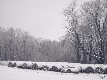 Snowy hay bales next to the barn, ready to go to the cows.