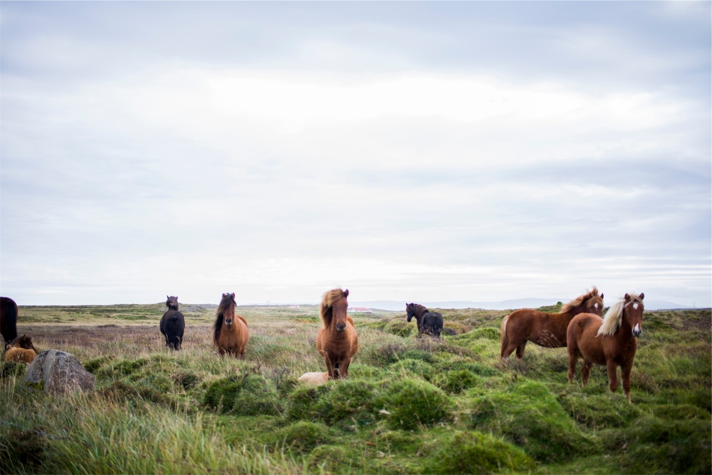 Island Ponies by Bethany Legg