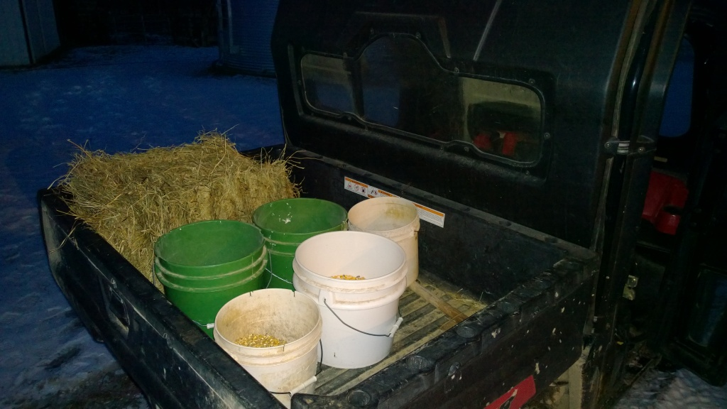 Feed ready for the morning