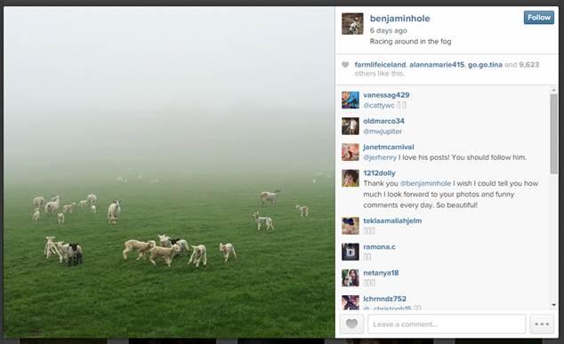 Benjamin Hole.Sheep in Fog
