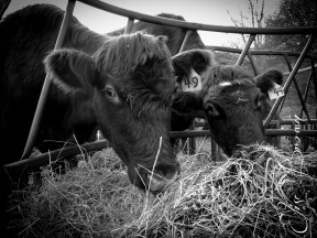 Don't steal my hay!