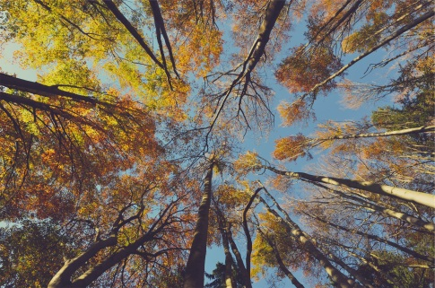 Fall Trees by Ales Krivec. Click for source.