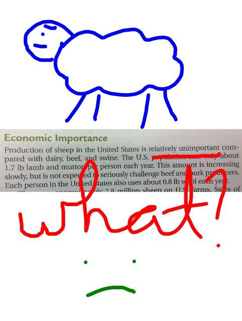 Economic Importance of Sheep