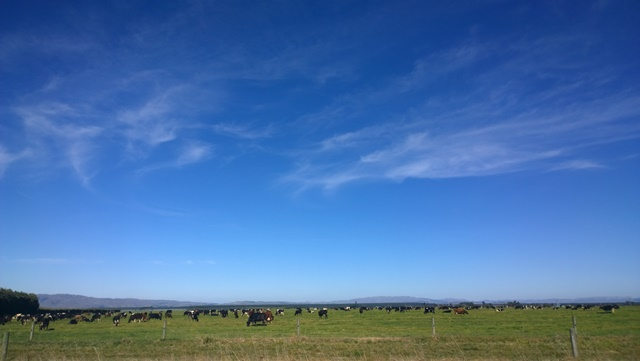 cows-in-pasture-and-sky