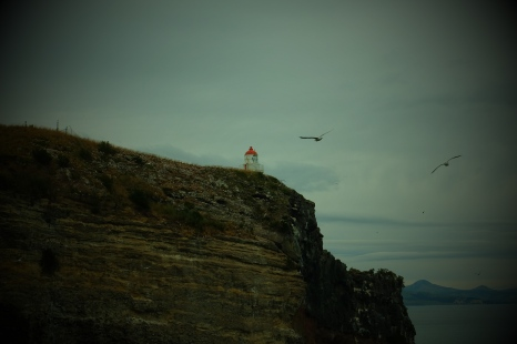 The lighthouse and seagulls at the end of the Otago Peninsula.