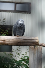 Bird in the aviary in Dunedin.