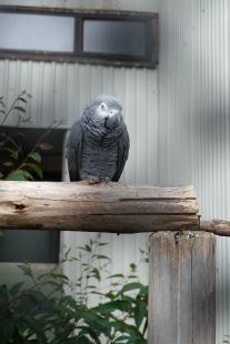 Bird in the aviary in Dunedin.