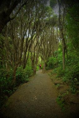 Walking down the path in Orokonui.