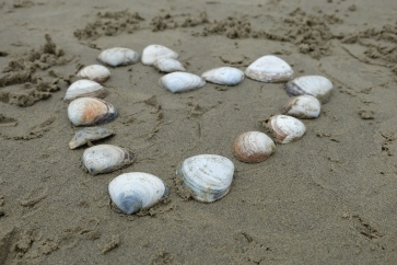 Shells arranged in a heart on Koekohe Beach, home of the Moeraki Boulders.