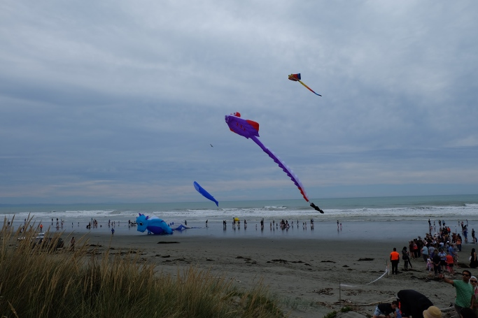 Kites flying with the Pacific Ocean nearby.
