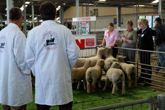 Southdown Show at Canterbury Agricultural and Pastoral Show