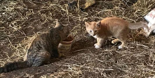 kittens medium